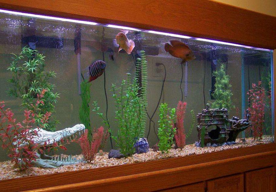 150 gallon freshwater aquarium 1000 aquarium ideas. Black Bedroom Furniture Sets. Home Design Ideas