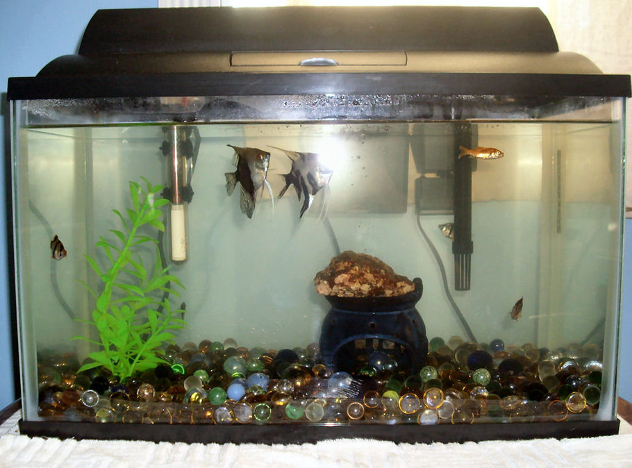 Fishy101 39 s freshwater tanks photo id 16349 full for 10 gallon fish tank cover