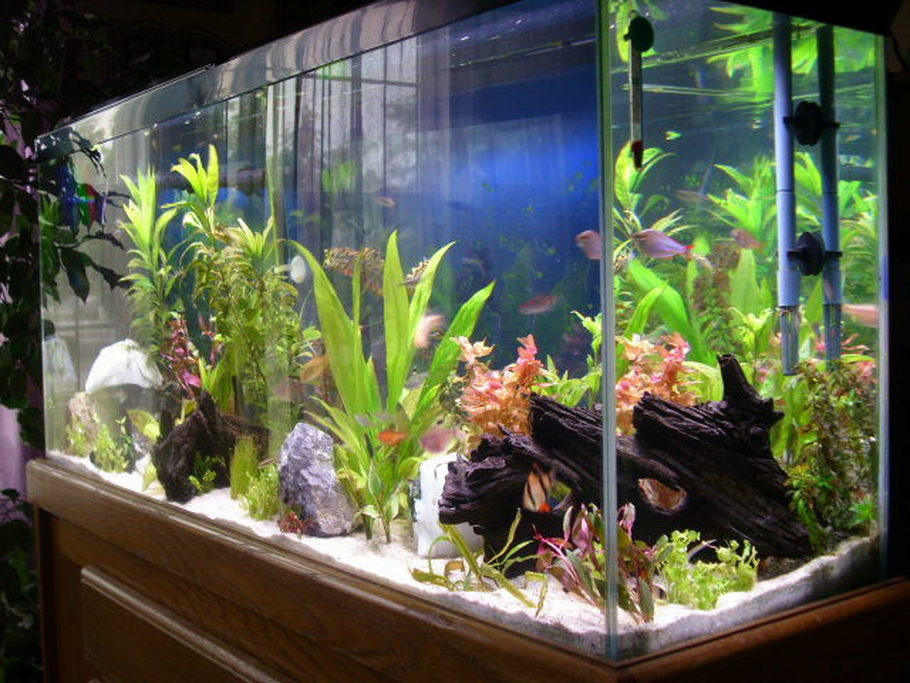 Emmaus 39 s freshwater tanks details and photos photo 18955 for 55 gallon fish tank setup
