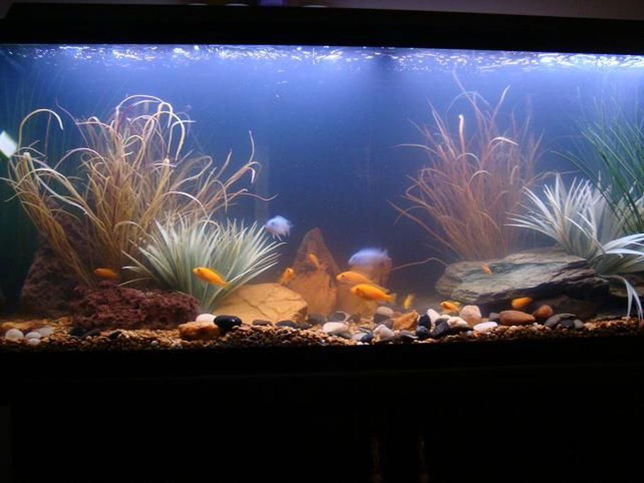 Cloudy freshwater aquarium 1000 aquarium ideas for Fish tank cloudy