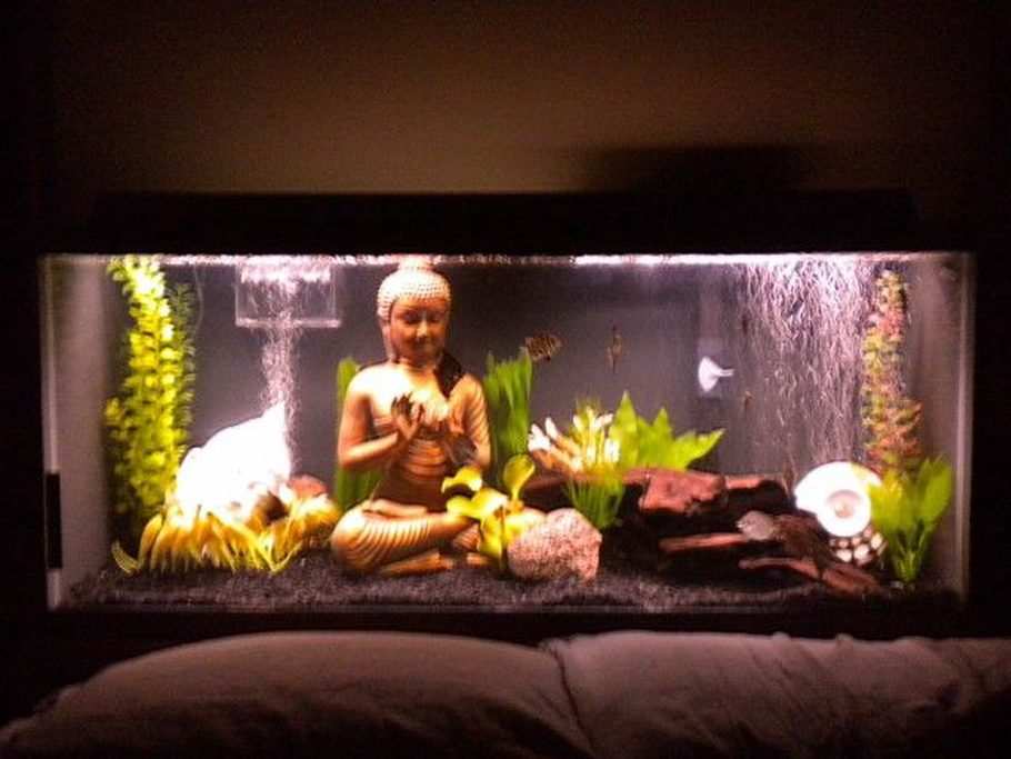 My 75 Gallon Brackish Water Tank