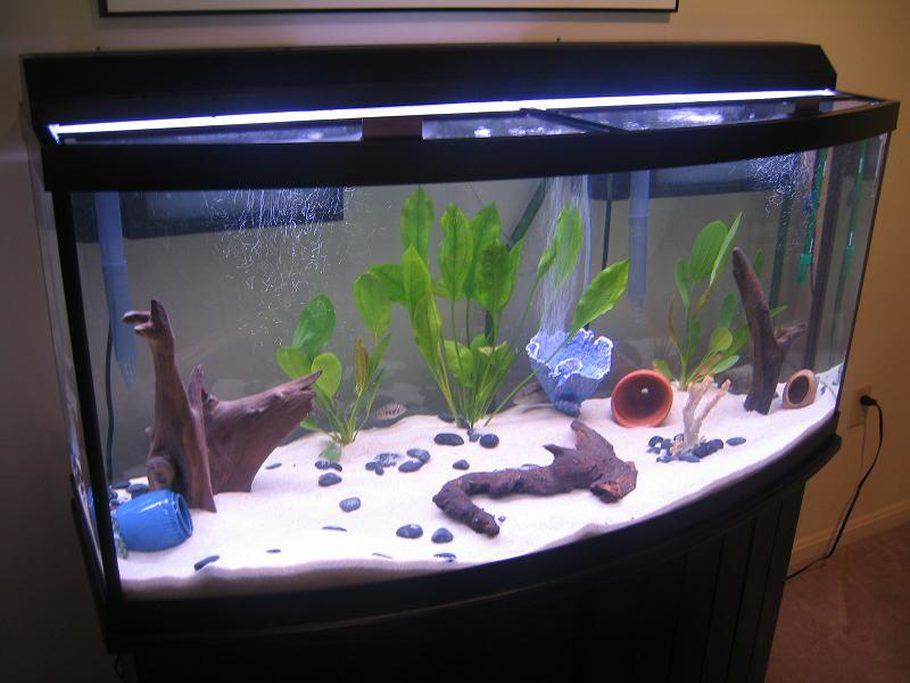 Usmc2531 S Freshwater Tanks Photo Id 2515 Full Version & 72 Gallon Bow Front Aquarium For Sale - 1000+ Aquarium Ideas