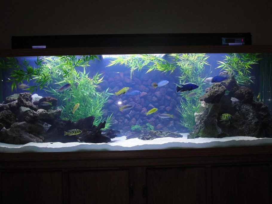 rated 9 cross - Freshwater Aquarium Design Ideas