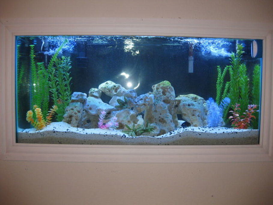 Bennyphan 39 s freshwater tanks details and photos photo for 55 gallon aquarium decoration ideas
