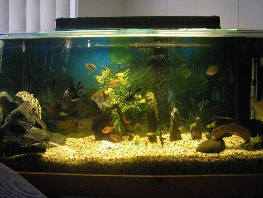 Jia j 39 s freshwater tanks photo id 32114 full version for Fish tank marbles