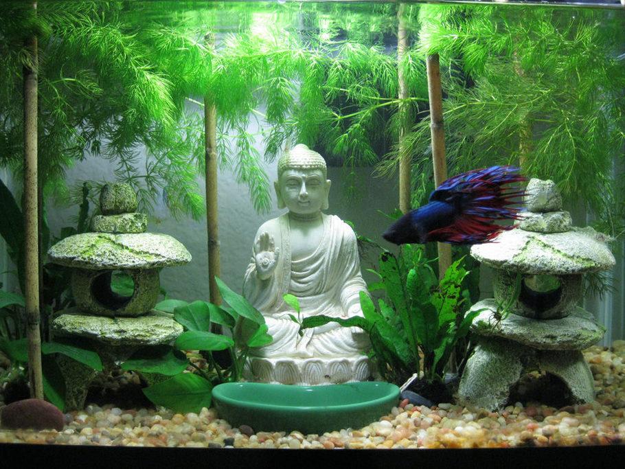 Kimotion 39 s freshwater tanks photo id 33520 full for Garden aquarium design