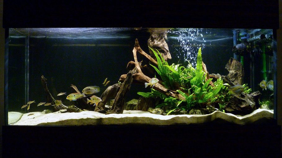 Most beautiful freshwater tanks all time for Tall fish tank decorations