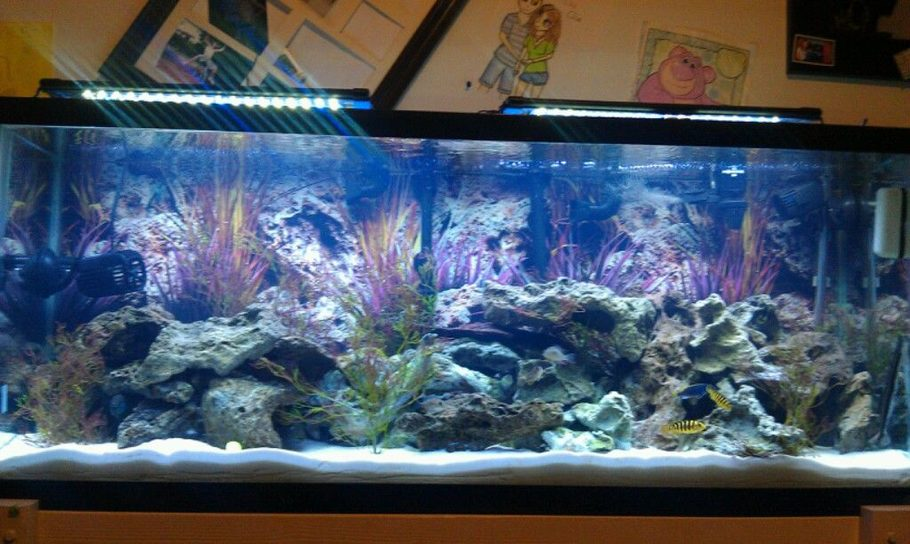 Benjamin1893 S Freshwater Tanks Details And Photos Photo