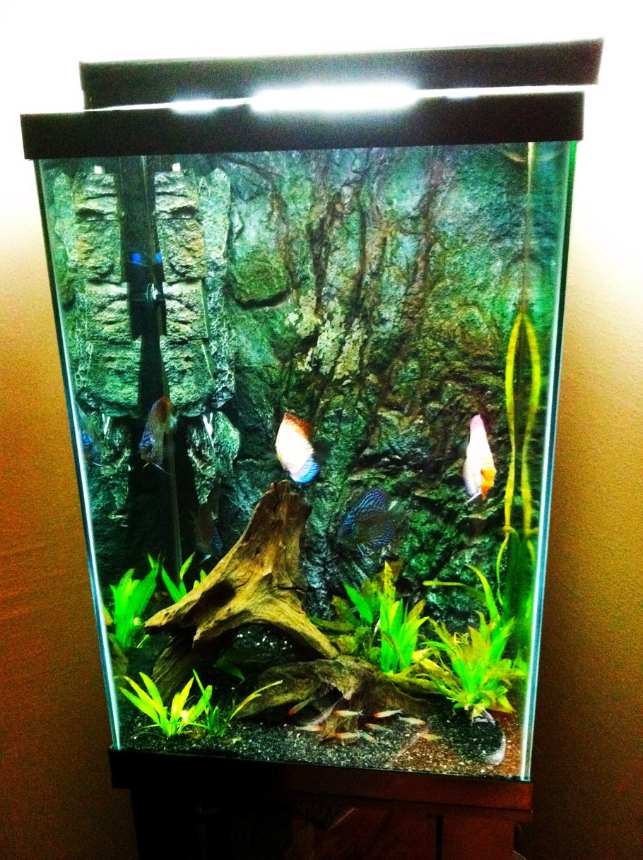 Joshmeneses 39 s freshwater tanks details and photos photo for Tall fish tank decorations