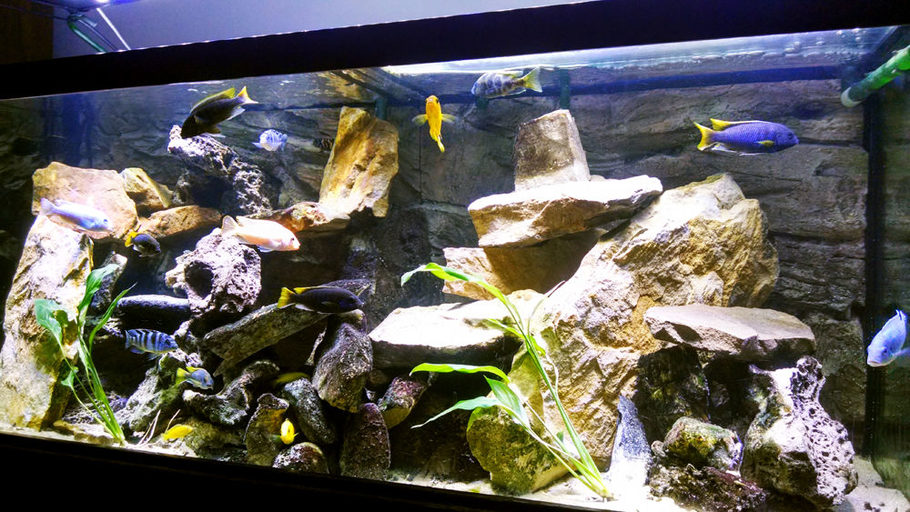 Summitbc S Freshwater Tanks Photo Id 41763 Full