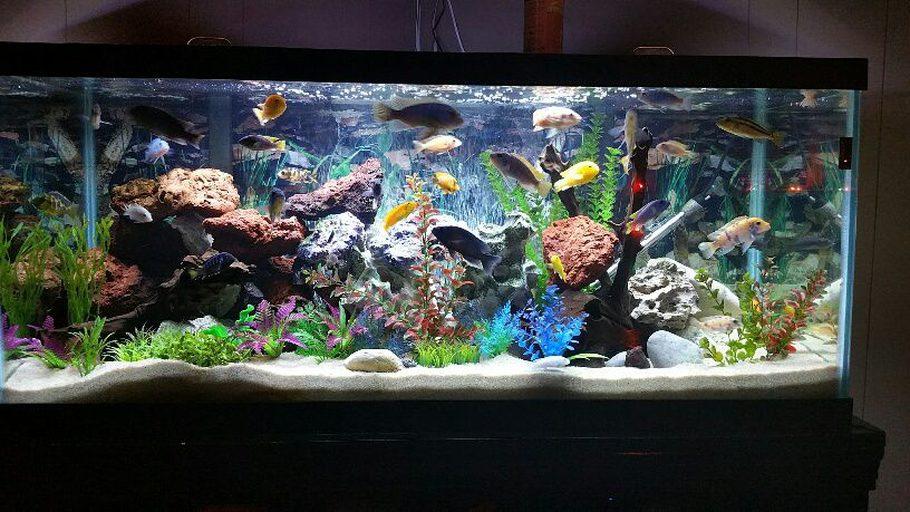 how to set up new aquarium on ecosmart live