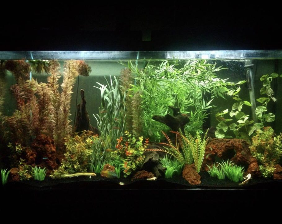 60 gallon, community tank with faux plants