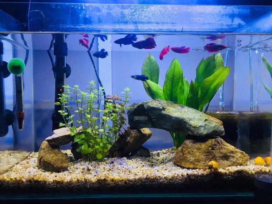 how has technology changed the aquarium hobby ratemyfishtank com