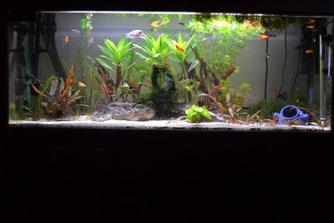 Preparing an Aquarium for Your Vacation
