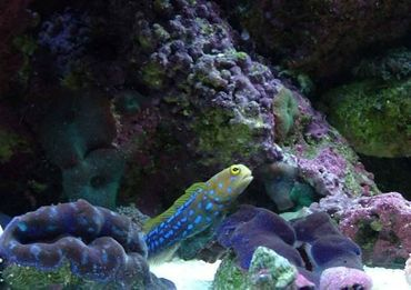 How to Modify PH in a Saltwater Tank