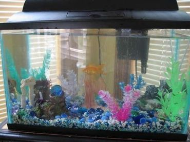 Moving - How to Prepare Your Tank for a Move