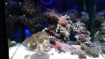 UV Sterilizers for Reef Aquariums