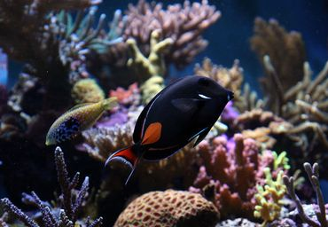 Choosing the Correct Temperature for a Marine Aquarium