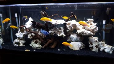 Tips for Using Rockwork in Saltwater and Reef Aquariums