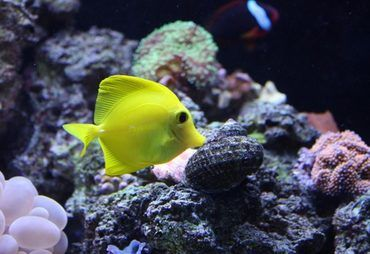 How to Solve Common Saltwater Tank Problems