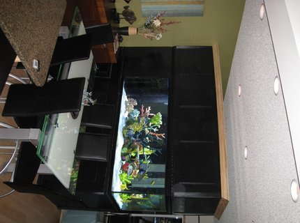 350 gallons saltwater fish tank (mostly fish, little/no live coral) - 350 Gallon Tank, divides our Dining Room from Our Living Room.... I couldn't live without it!!!!