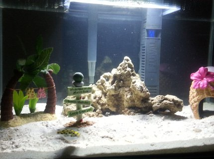 75 gallons saltwater fish tank (mostly fish, little/no live coral) - 2x Green Spotted Puffer