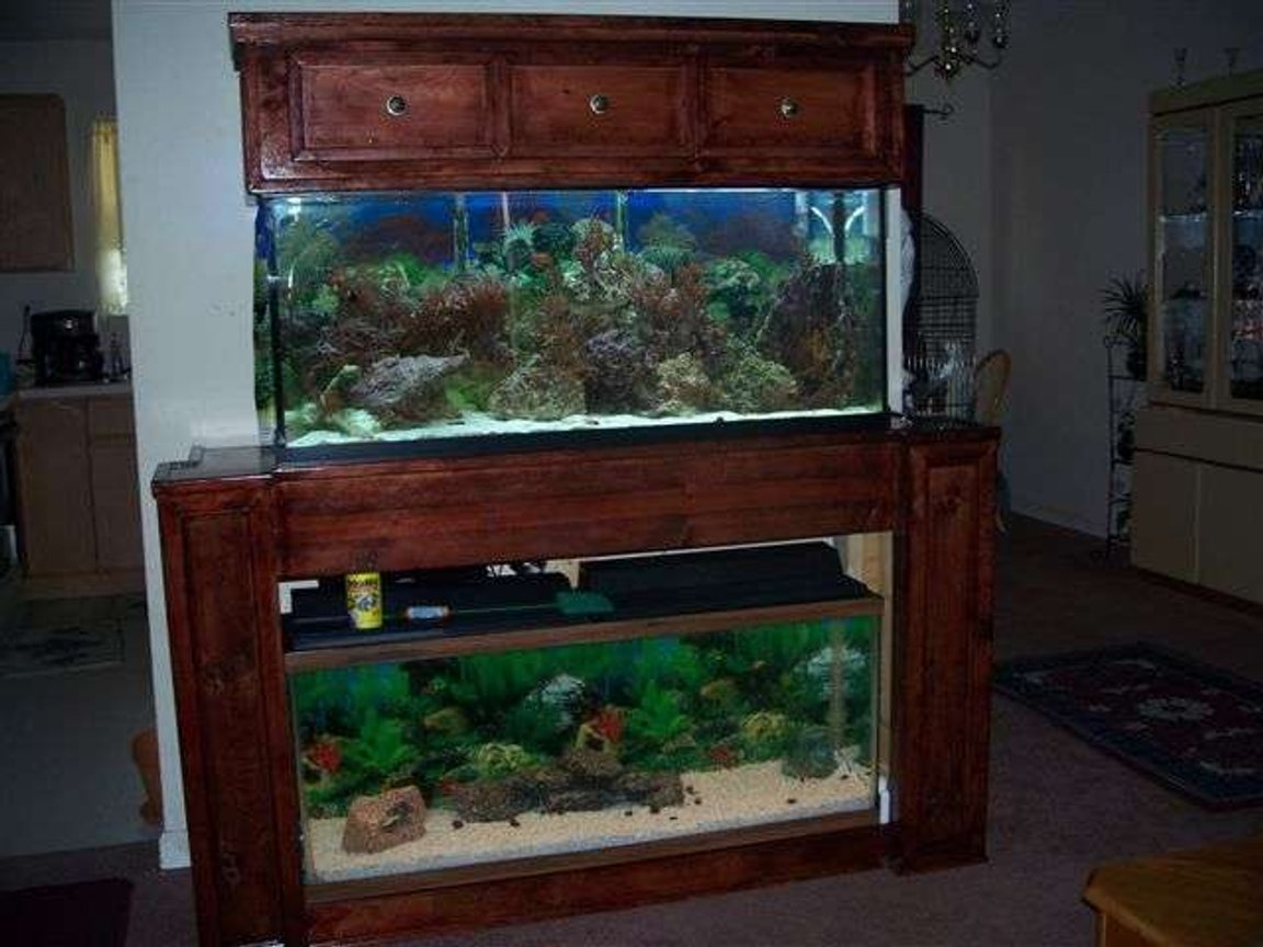 fish tank picture - Full Front