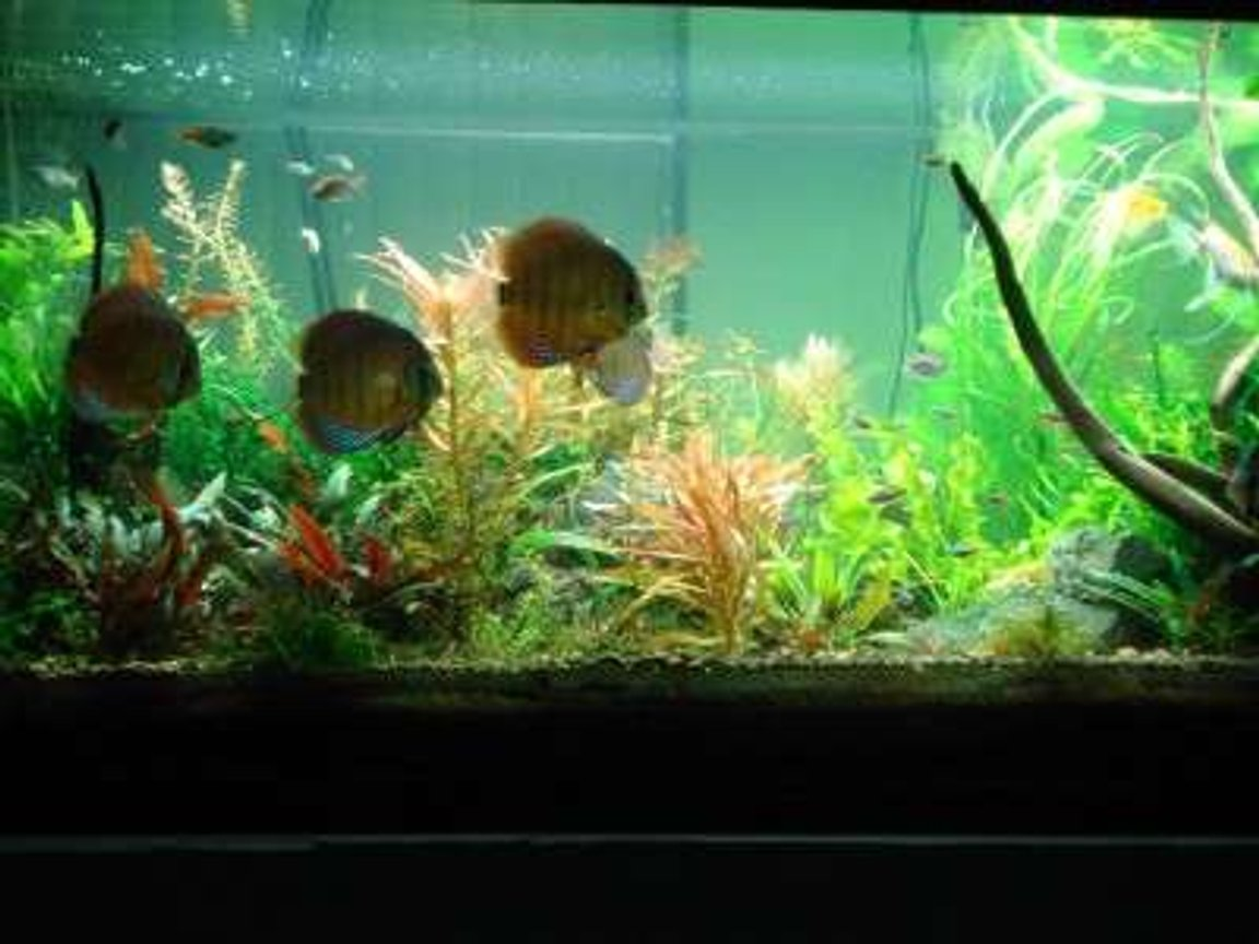 fish tank picture - another shot of my tank
