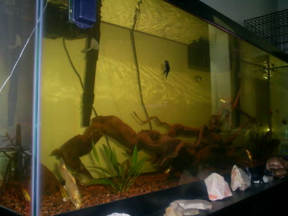 fish tank picture - My 50G (so) Long (I had to take the picture from the side).