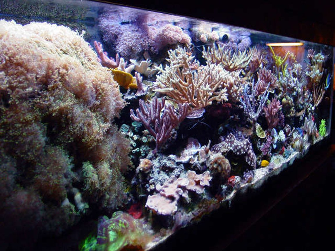 fish tank picture - tank pic #2