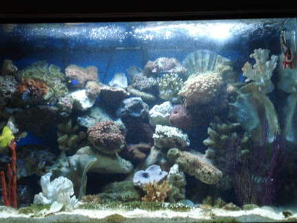fish tank picture - Full Tank View