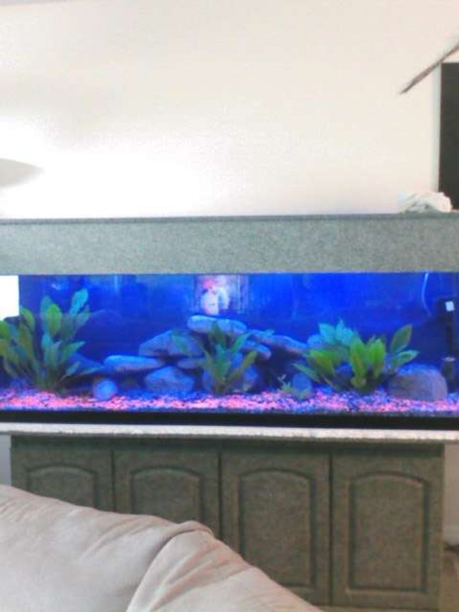 fish tank picture - clear view blue lights only finished tank