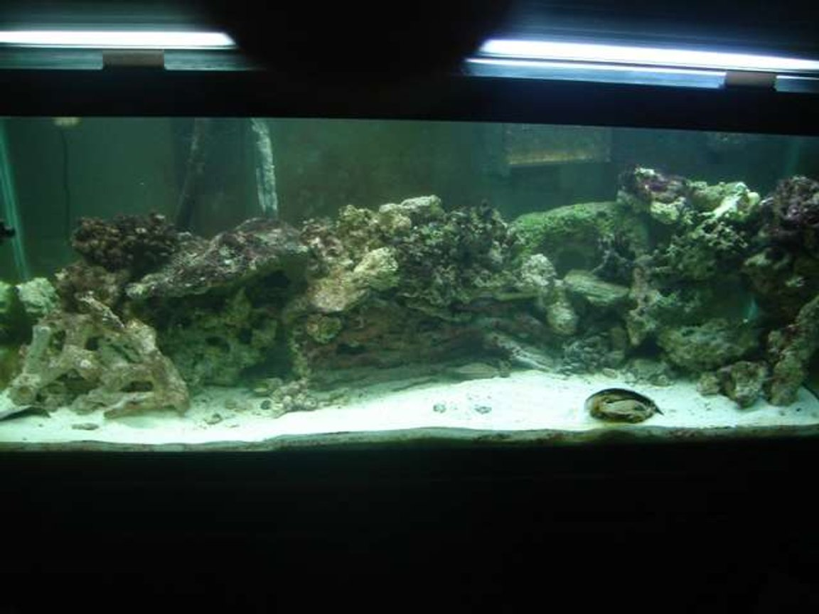 fish tank picture - This is my 75 gallon saltwater fish tank it has around 200 pounds of live rock and it contains my 2 maroon gold stripe clown fish and my 2 banded bamboo shark eggs.