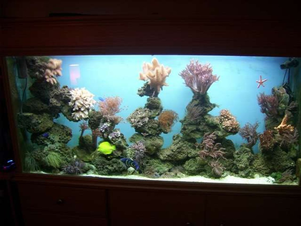 fish tank picture - mix reef