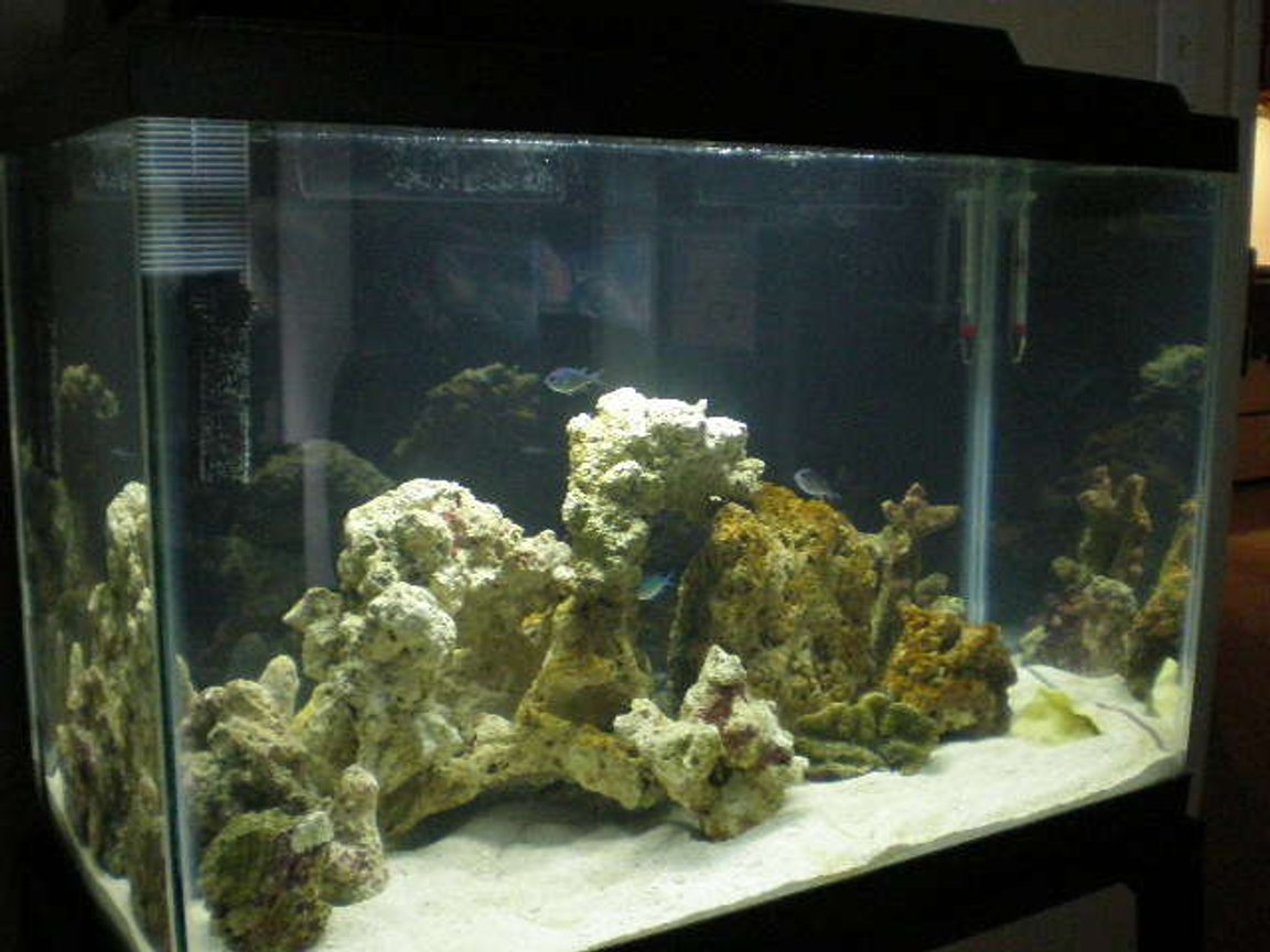 fish tank picture - last set up on rocks I