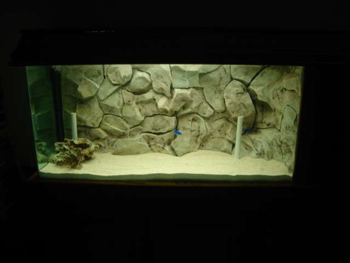 fish tank picture - This is my starting Reef tank Live rock only and few fish but have to start some where back is custom rock