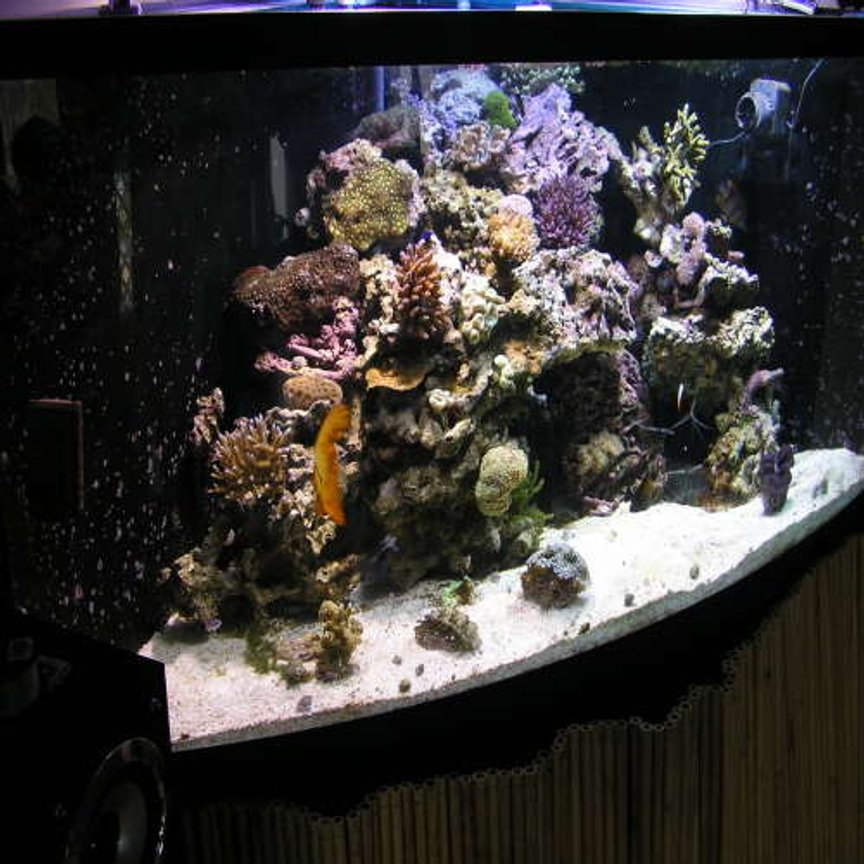 fish tank picture - angle side