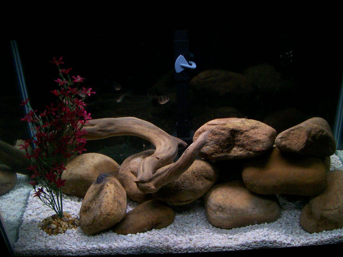 fish tank picture - River rock and beach driftwood cleaned and cured myself.