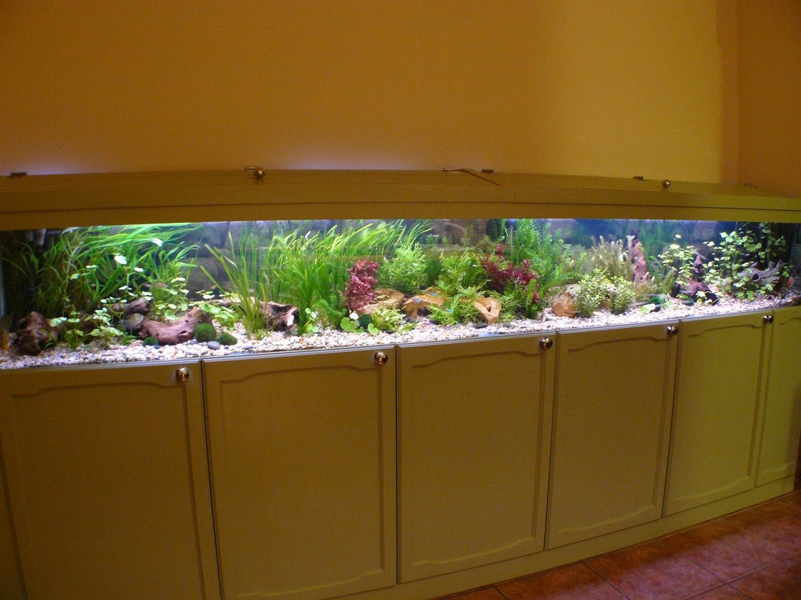 fish tank picture - Finally filled with water (phew, no leaks) A few bunches of plants changed around a few times and away we go. Not a bad bit of joinery for an amateur neither.