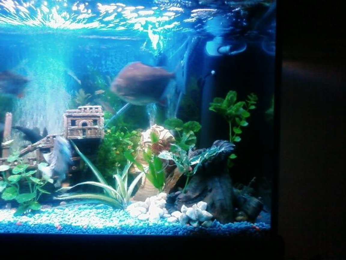fish tank picture - this rock is the cray fish crib