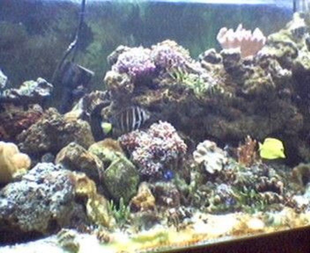 fish tank picture - my 125 after two years