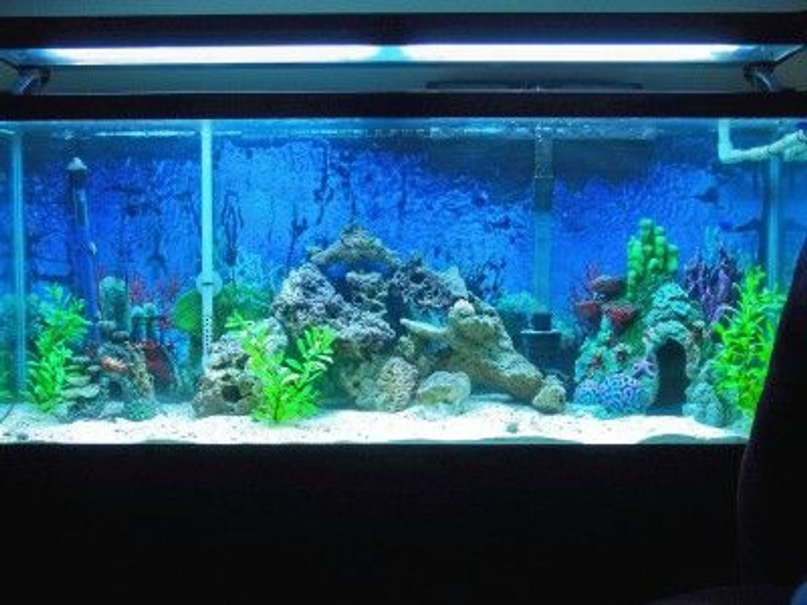 fish tank picture - 2 mos new, 55 gallon