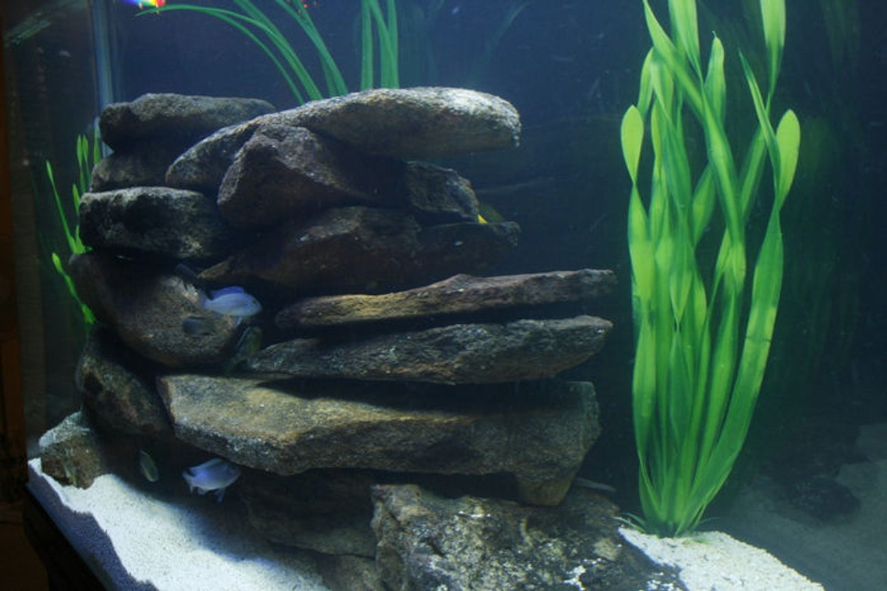 fish tank picture - Side view 2