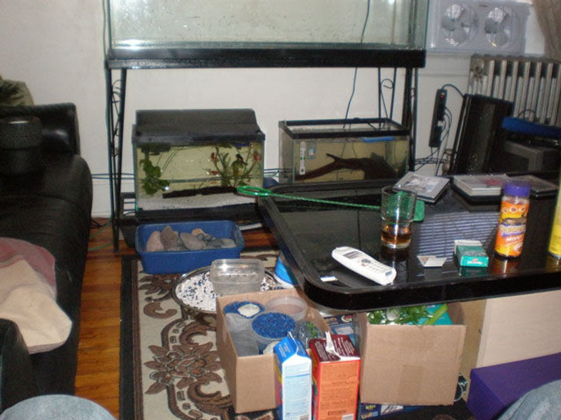fish tank picture - Yep!...all the crap! and the 2-10gallons underneath the 55. the stand is real basic but it affords me MORE space, unlike the wood or furniture style.