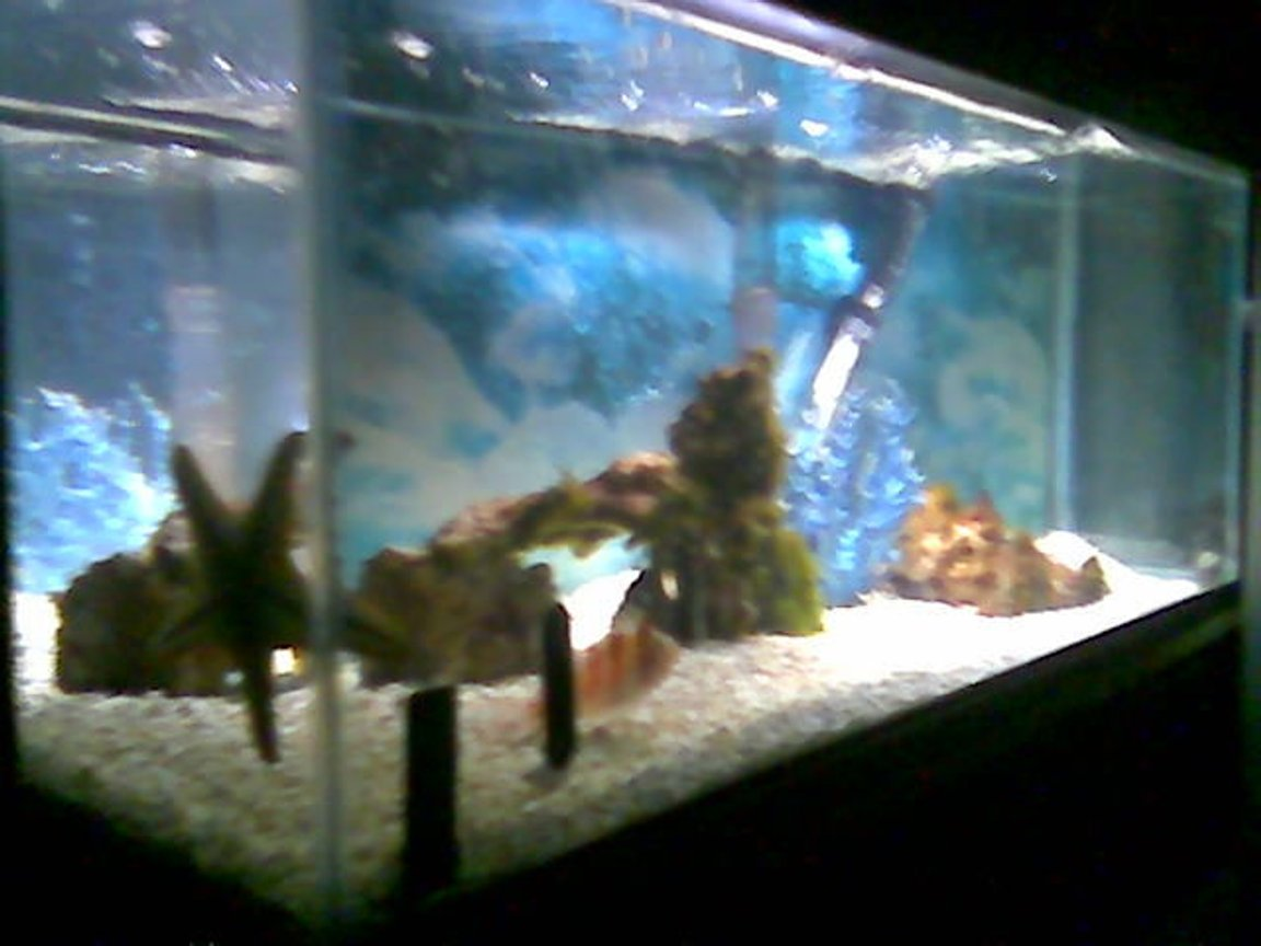 fish tank picture - 20g salt pic 2