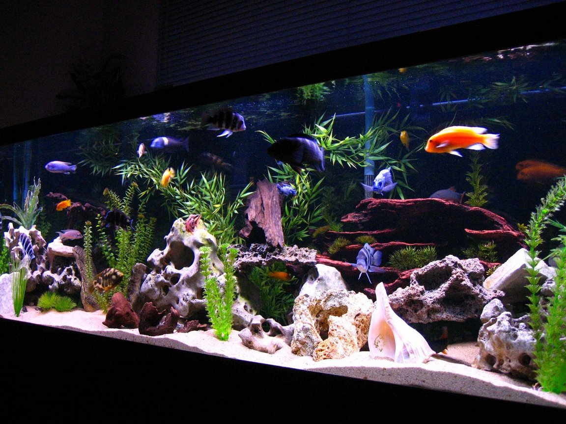 fish tank picture - Longer View