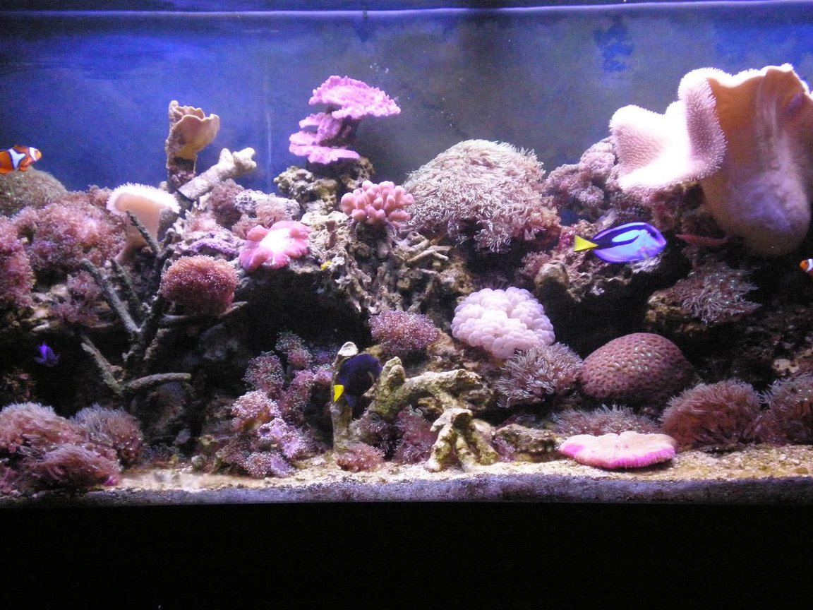 fish tank picture - closer view