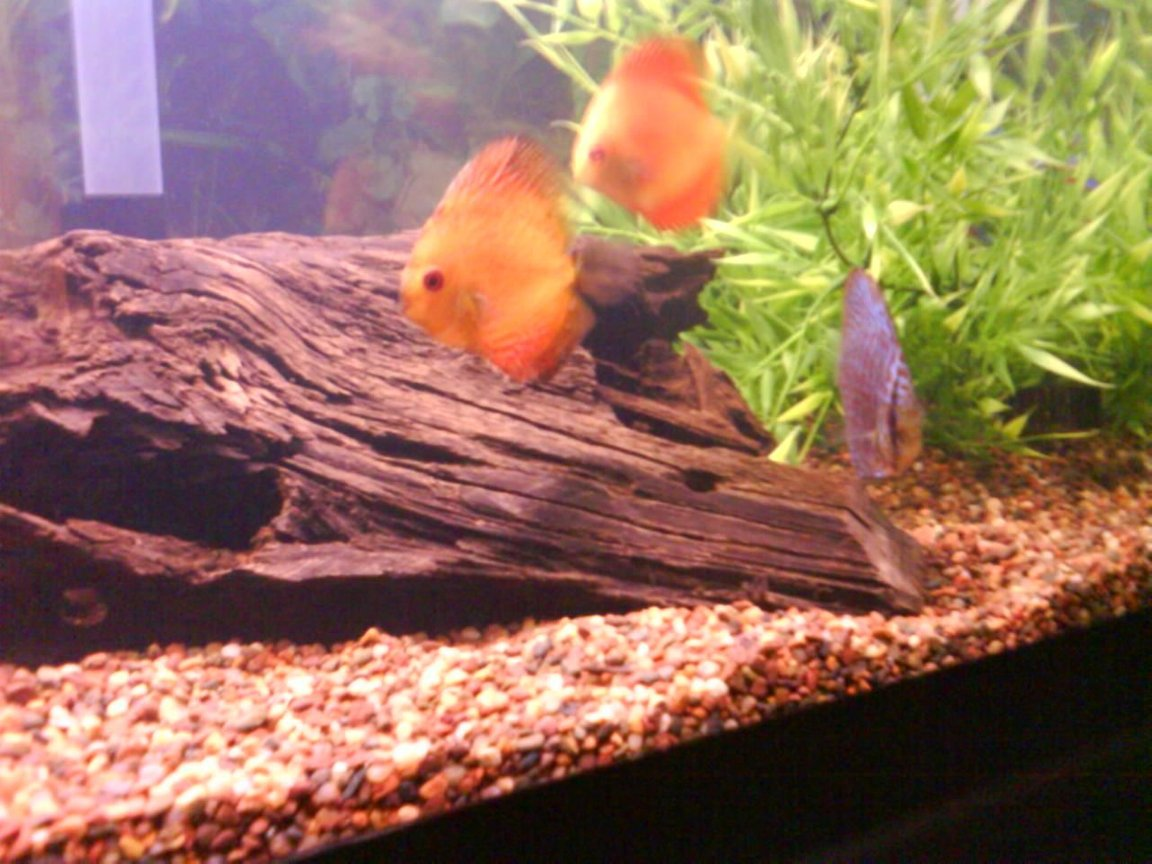 fish tank picture - aren't they pretty?