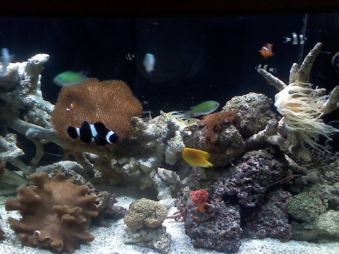 fish tank picture - coral