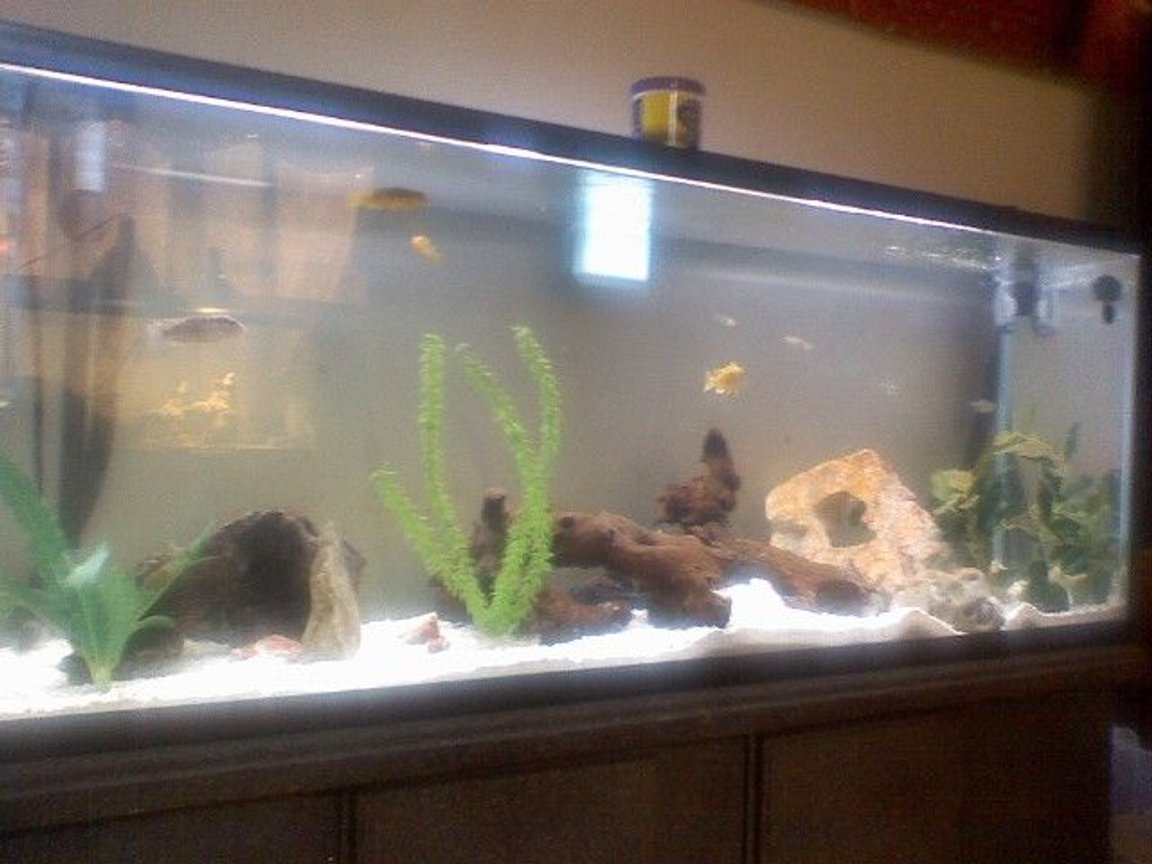 fish tank picture - my 55 gal slanted pik